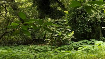 Environmentalism In Hindu Thought – Part I