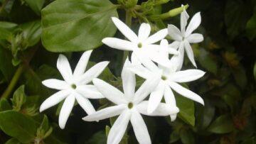 Describing the Indescribable – Nature as Simile for Gods